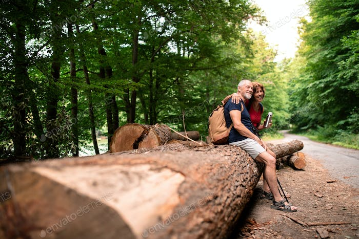 Senior tourist couple with backpacks in forest in nature, sitting on log.