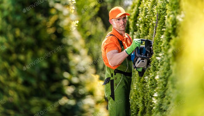 Hedge Trimming Job