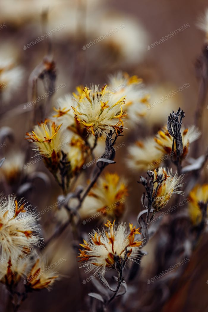 Fluffy plant with dried tiny flowers