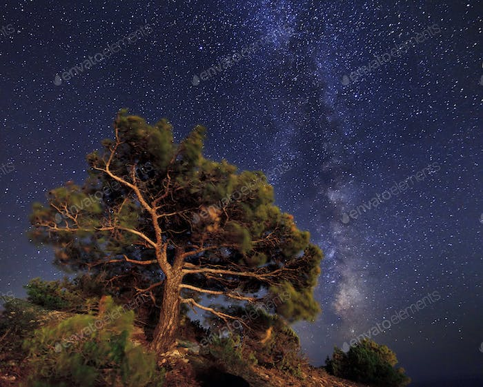 Pine trees on the background of an amazing night sky
