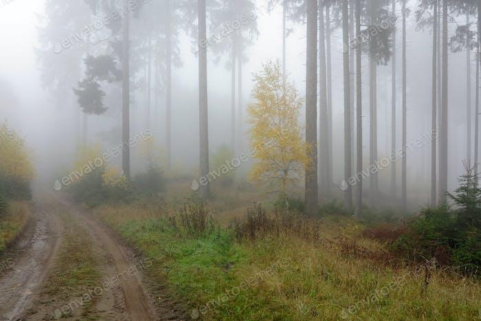 Forststraße im Herbst nebligen Wald