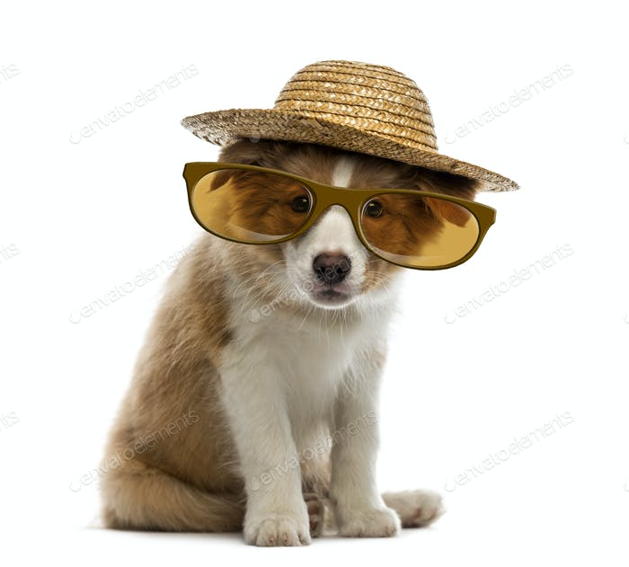 Border Collie puppy wearing a straw hat and glasses
