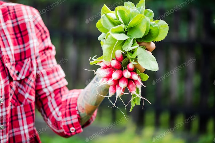 Tattooed young hipster woman holding raddish in garden