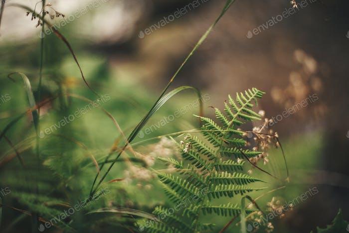 Beautiful fern leaf and wildflowers