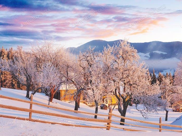 Amazing mountains in the morning sunlight. Small cozy village. Carpathian, Ukraine, Europe. Beauty
