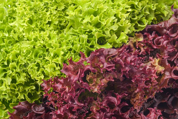 green and red salad mix