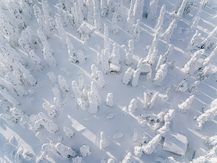 Aerial view of winter forest covered in snow in Finland, Lapland. Top view