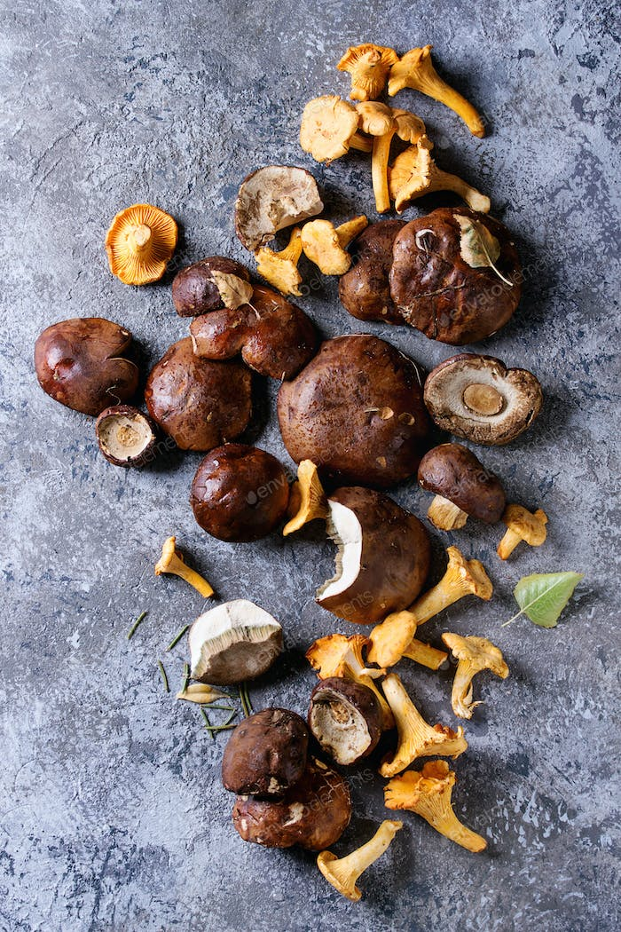 Porcini boletus and chanterelles mushrooms