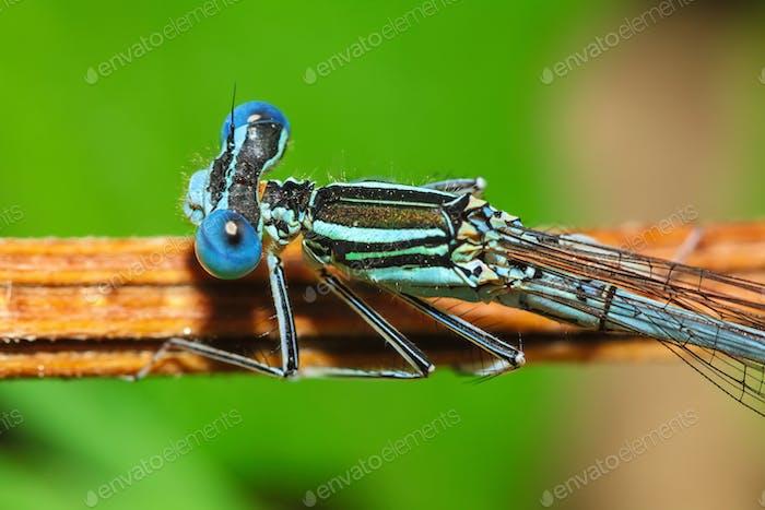 Libelle auf einer Pflanze.