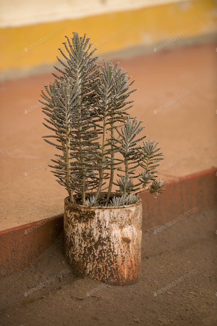 Outdoor potted plant, Tanzania, Africa