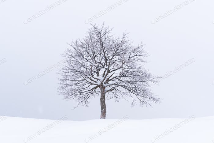 Minimalistic landscape with a lonely naked snowy tree