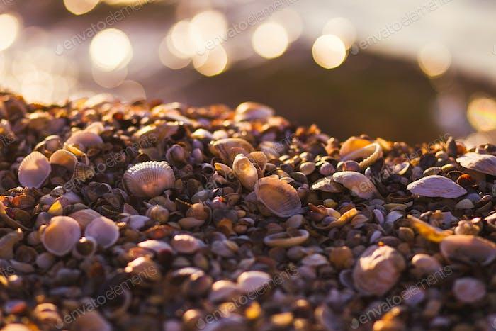 Seashells on the shore with bokeh