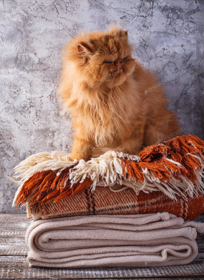 Red cat sitting on a stack of blankets