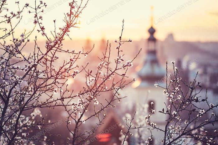 Frühlingsaufgang in Prag