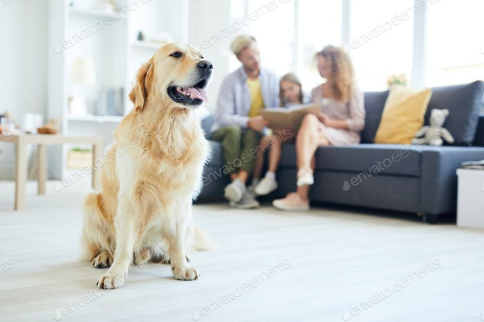 Family guardian