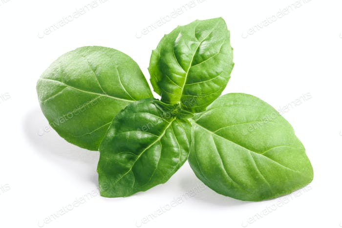 Basil O. basilicum leaves, clipping paths