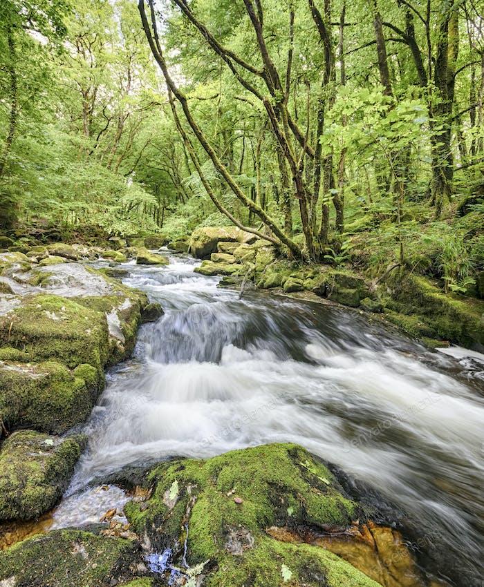 Golitha Falls in Cornwall