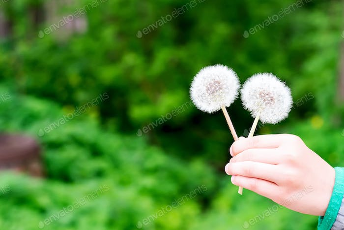 Child holds dandelion in spring garden. Springtime. Little baby in spring landscape background