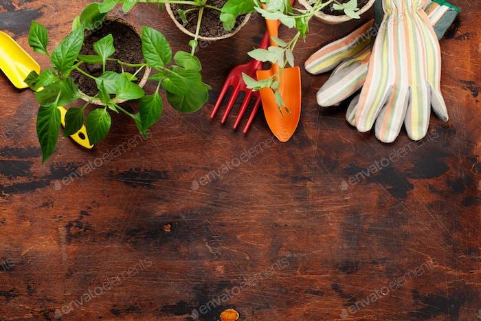 Gardening tools and seedlings