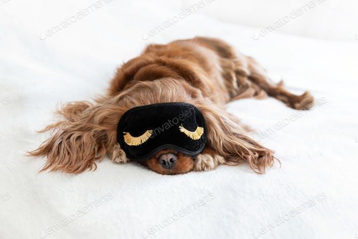 Dog in sleeping mask