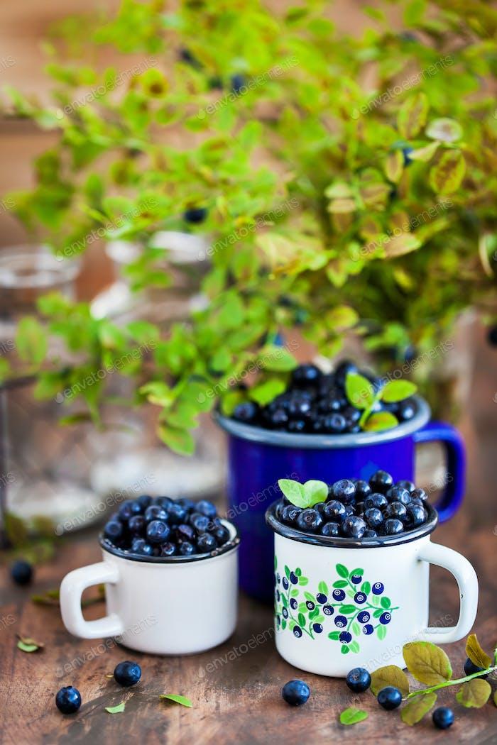 Fresh ripe bluberries (bilberries) in enamel mugs