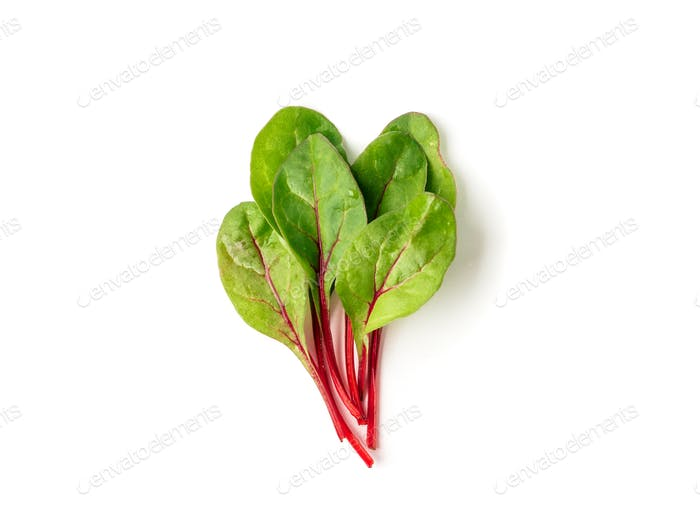 Bunch of green chard leaves or mangold isolated