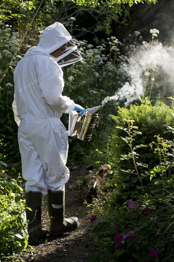 Beekeper wearing protective suit at work, using smoker to calm bees.