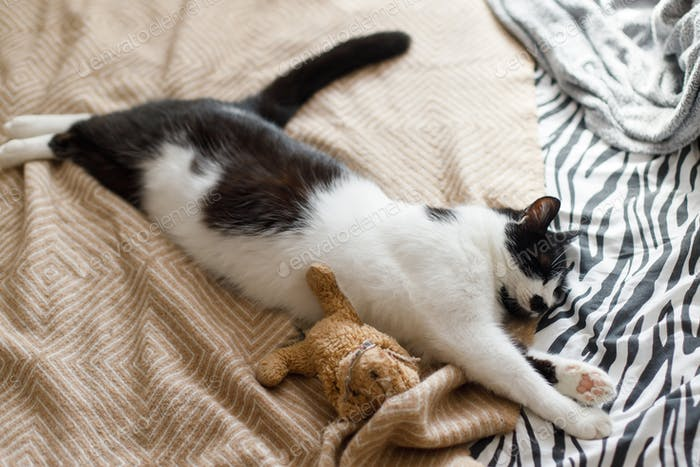 Cute cat sleeping on bed with his teddy toy