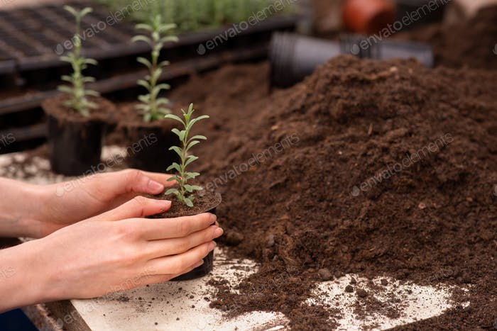 Growing plants, planting in greenhouse and selling flowers, eco agriculture business