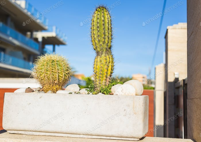 Decoration, nature and village concept - Cactuses in a flower pot, beautiful decoration in garden