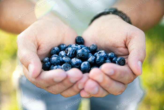 Blueberry in the hands of the farmer, man, fruit, food, nature