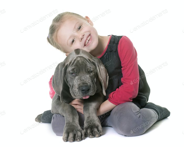 puppy great dane and child