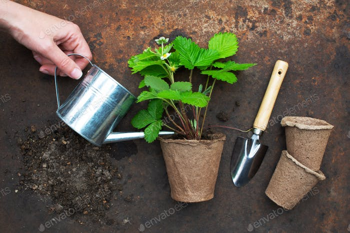 Organic farming concept, garden tools and plant