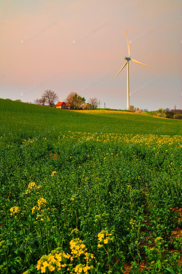 Cabin on the rape seed field and wind turbine