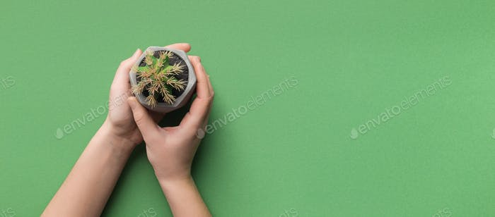 Eco friendly. Girl holding cactus in pot on green background