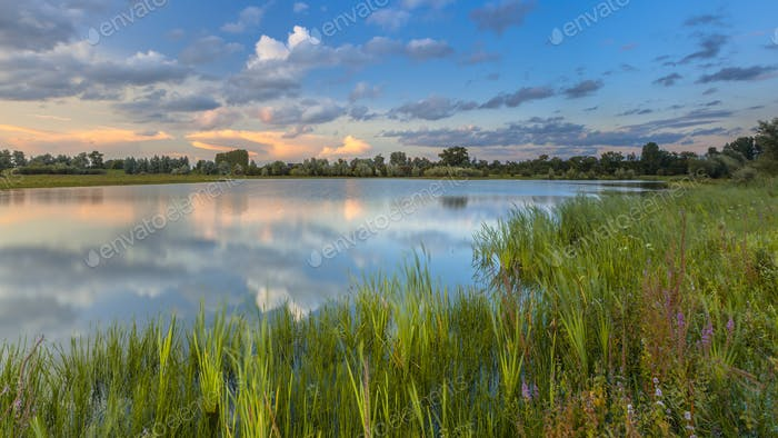 Lush River bank vegetation in forelands Blauwe Kamer