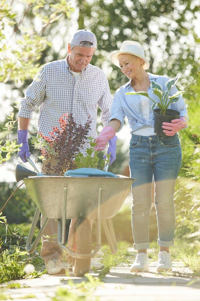 Seniorenpaar Gartenarbeit im Sonnenlicht