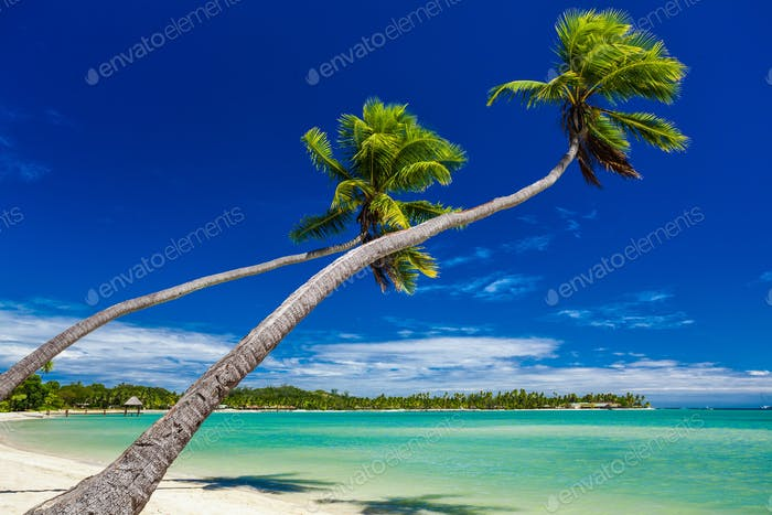 Palm trees hanging over stunning lagoon on Fiji Islands