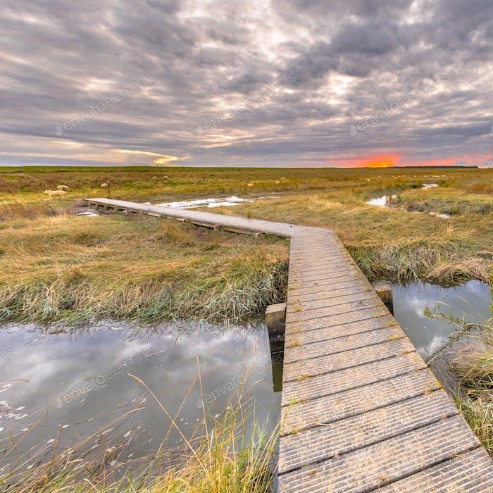 Boardwalk in Tidal Marshland nature reserve Saeftinghe insta