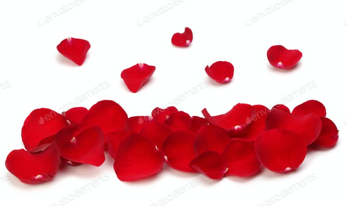 Red rose petals on white