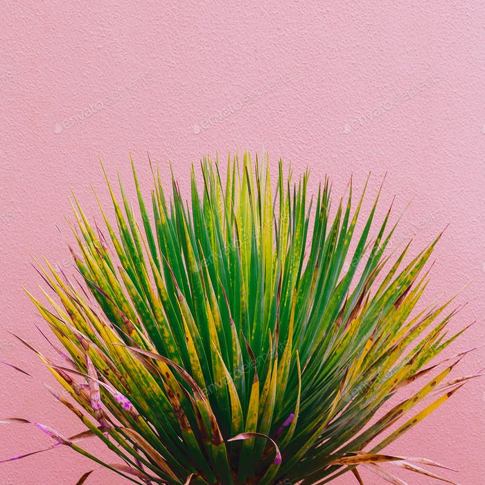 Fashion plants on pink content. Green on pink background wall