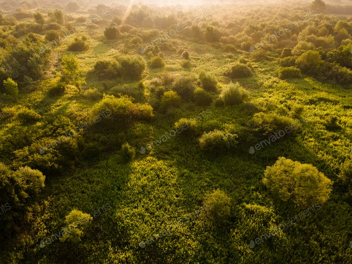 Lush Green Outdoors in Morning Sunlight and Fog
