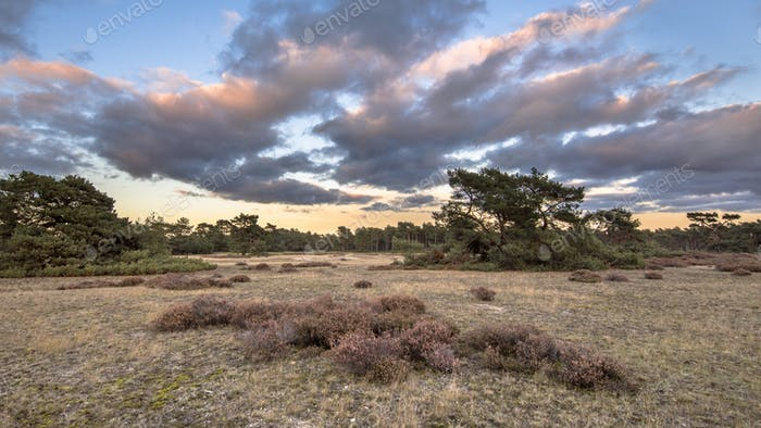 Sunset over Hoge Veluwe National Park