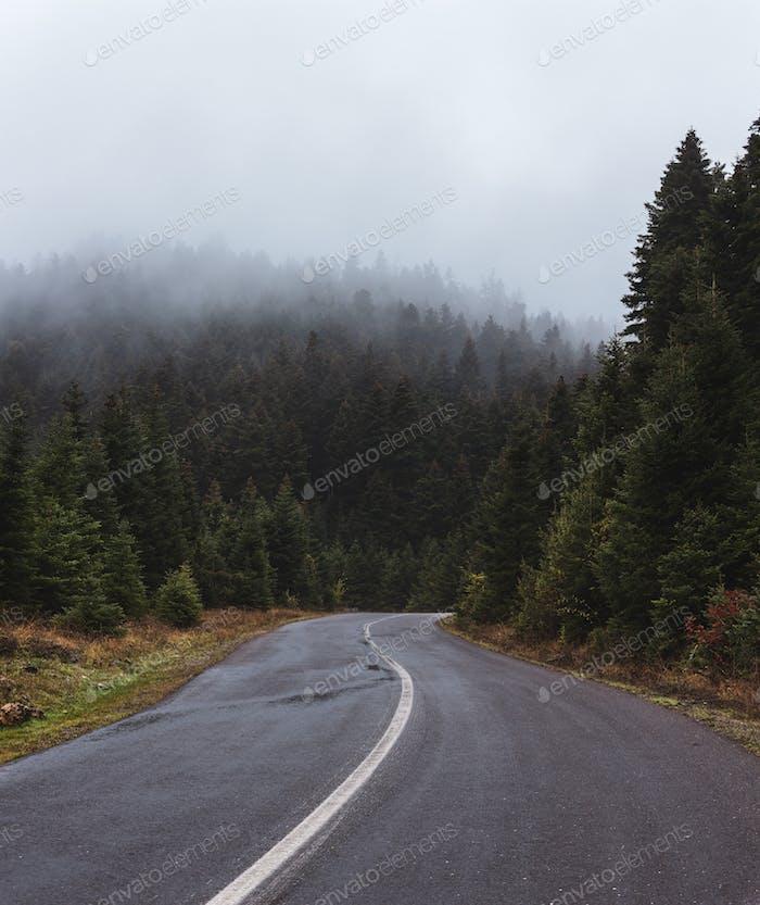 Misty Road In Fall