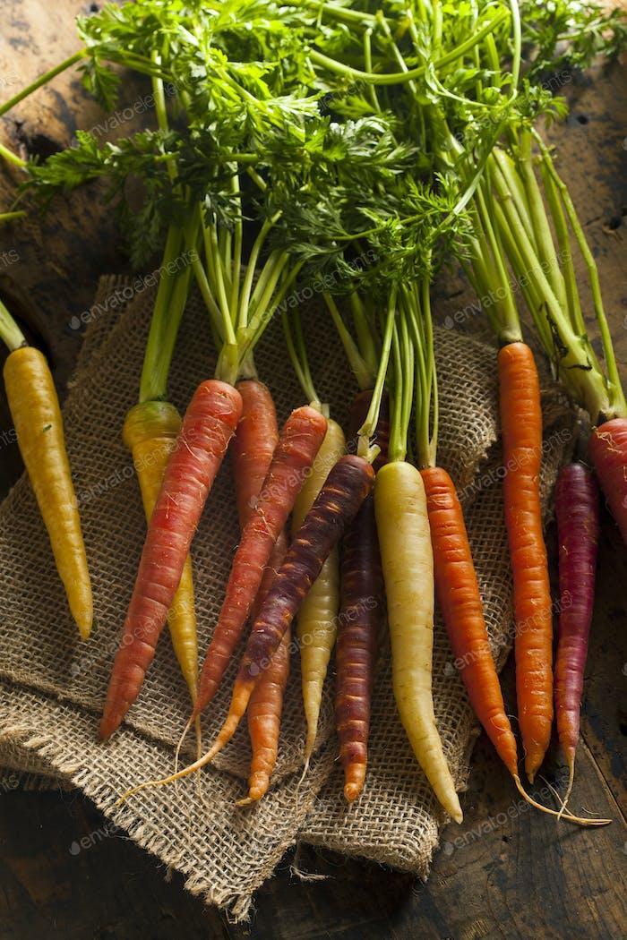 Bunte bunte bunte rohe Karotten