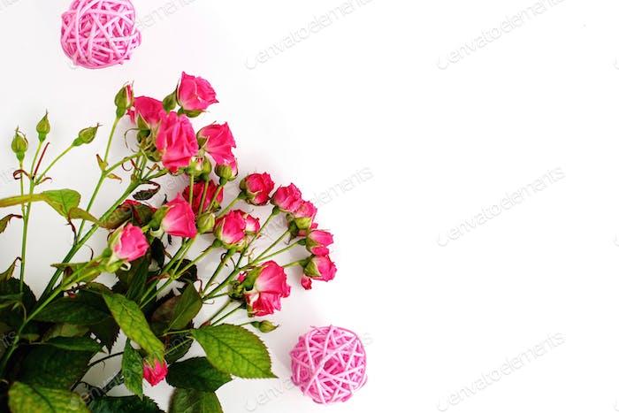 stylish roses on white background