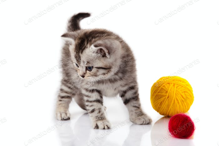kitten with balls of threads. little kitten on white background.