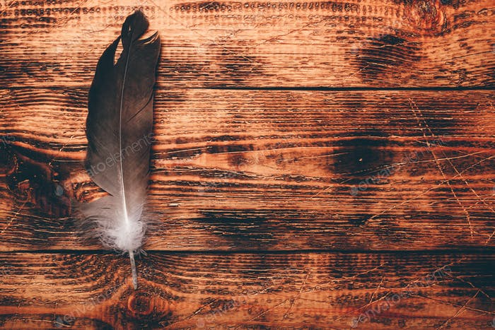 Hawk feather over wooden table