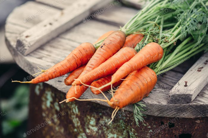 Organic carrots, farm food