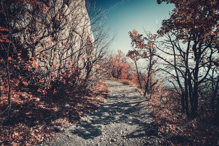 Straße in den Herbstbergen